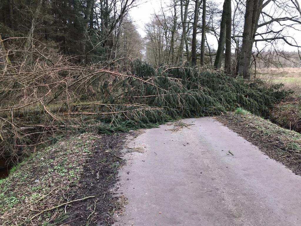 Baum auf Straße im Hiddinger Bruch