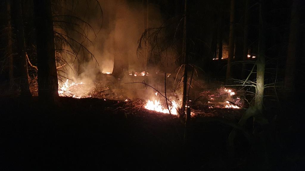 Brennt Unterholz im Wald am späten Abend