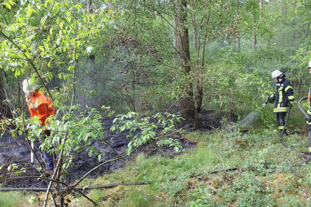 Brennt Baum