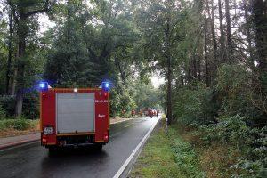 Baum auf Straße zwischen Hiddingen und Jürshof