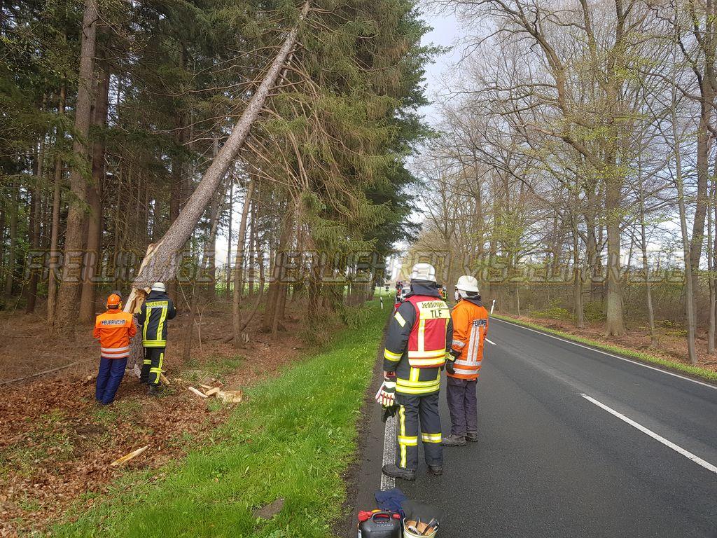 Read more about the article Baum droht bei Hof Tadel auf die Landstraße zu fallen